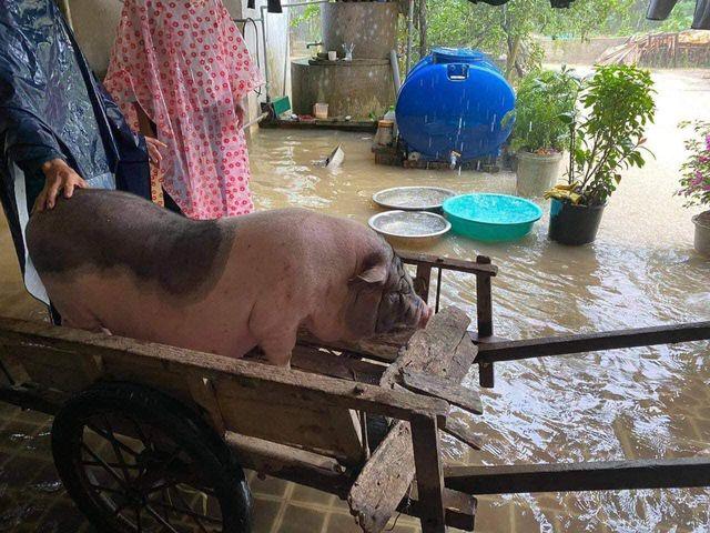 Mưa lớn không dứt, người dân Nghệ An trắng đêm chạy lũ, lên mạng cầu cứu, sáng ra nước đã ngập gần tới nóc nhà-11