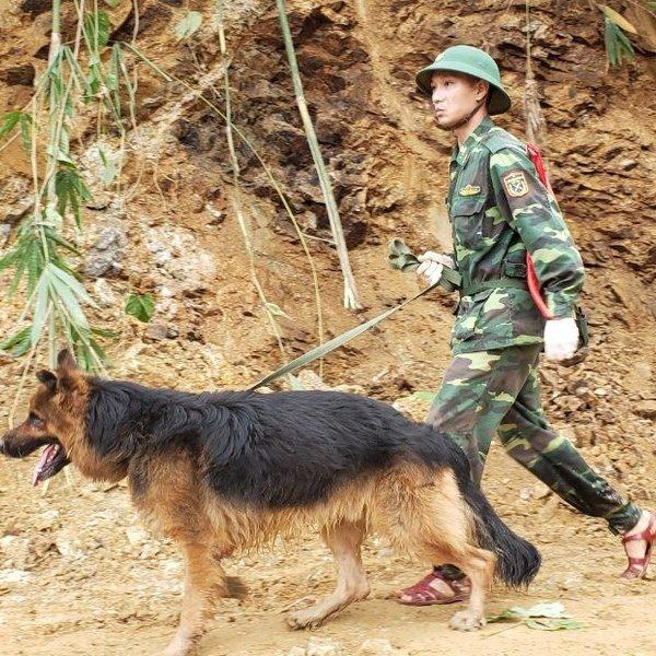 Cảnh khuyển dầm mình dưới mưa tìm kiếm nạn nhân vụ sạt lở ở Quảng Nam