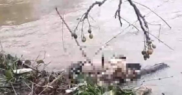 Huế: Phát hiện thi thể người đàn ông bên bờ sông Lợi Nông