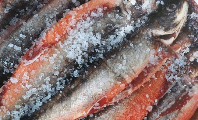 5 loại cá có khả năng biến thành độc dược, được khuyên nên ăn ít kẻo ung thư tìm đến-2