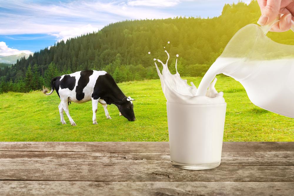 Sữa bò và sữa đậu nành: Đặt lên cân hai loại sữa được ưa chuộng, xem sữa nào nổi trội hơn-1