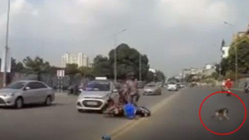 Vụ người đàn ông 'bỏ mặc' bạn gái giữa đường sau tai nạn để cứu chó cưng: Hé lộ thông tin mới đảo chiều toàn bộ câu chuyện