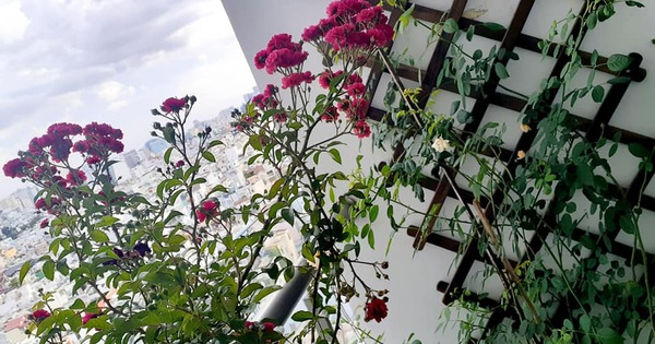 Bà mẹ trẻ Sài Gòn biến ban công trống trơn thành khu vườn ngập tràn hoa lá chỉ với 2,2 triệu đồng