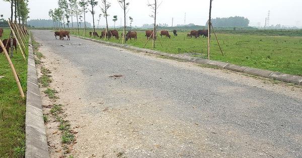 Nghị định 148/2020: Kiểm soát chặt phân lô bán nền tràn lan