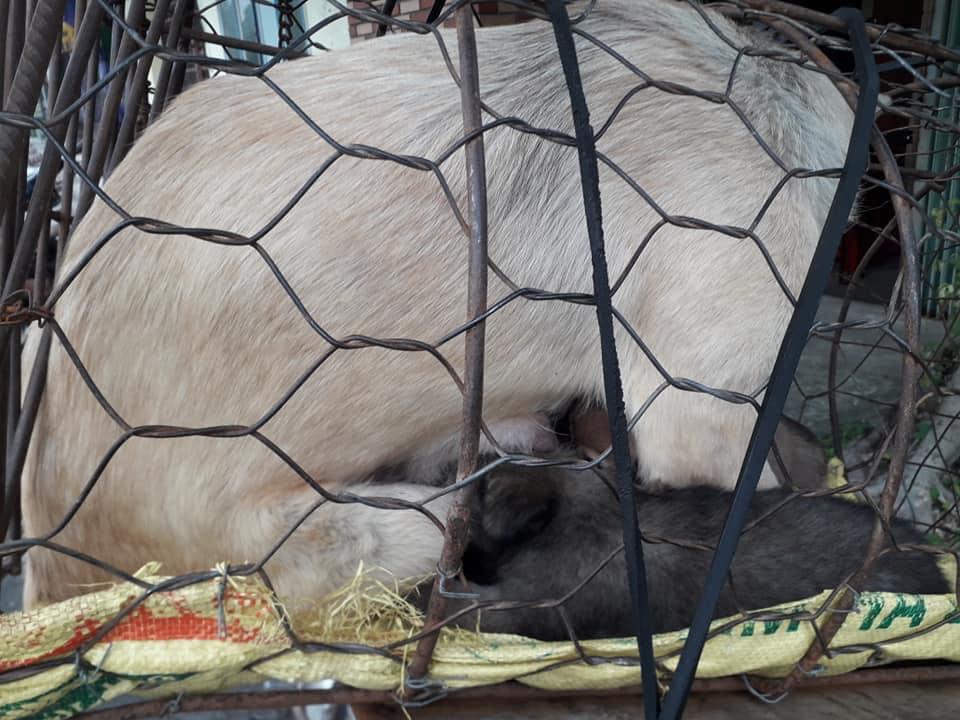 Hình ảnh khiến MXH Việt dậy sóng: Chó mẹ cho đàn con bú trước khi bị đưa vào lò mổ-2