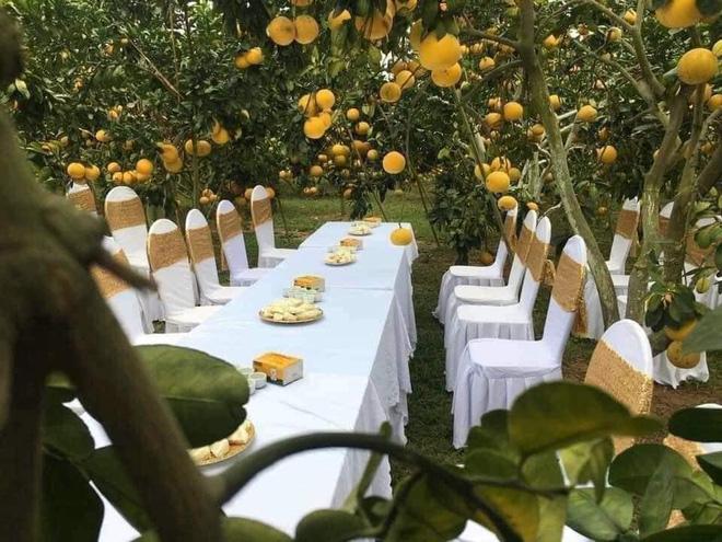 Đám cưới trong vườn cam sai trĩu quả khiến dân mạng trầm trồ nhưng vẫn lo ngại một nguy cơ-1