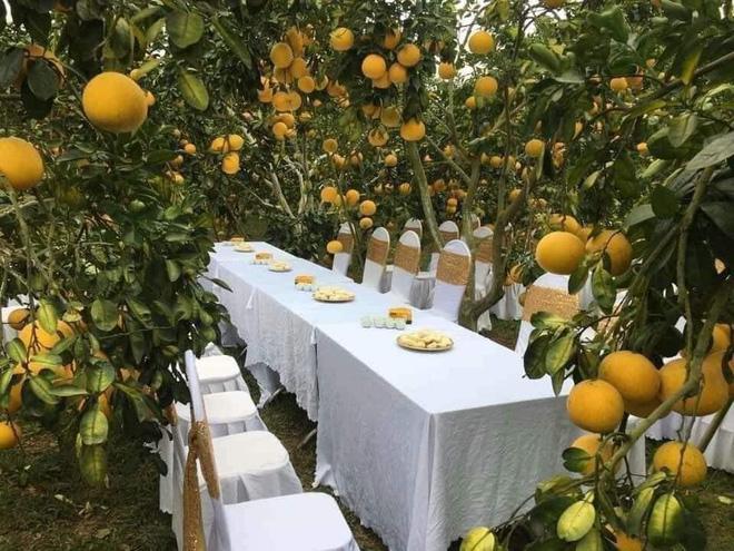 Đám cưới trong vườn cam sai trĩu quả khiến dân mạng trầm trồ nhưng vẫn lo ngại một nguy cơ-2