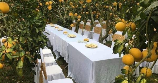 Bàn tiệc cưới bày giữa vườn trái cây ở miền Tây gây xôn xao khắp mạng xã hội, nhiều người gợi ý nên mang theo theo thứ đặc biệt này khi đến dự