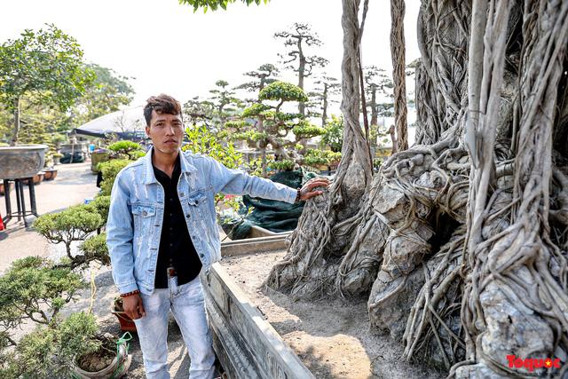 Cây sanh cổ dáng lạ được rao bán 700 triệu ở Hà Nội-3