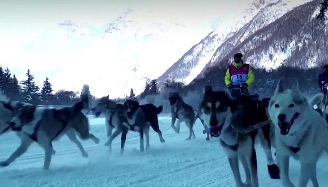 Giải đua chó kéo xe trượt tuyết trên dãy Alps