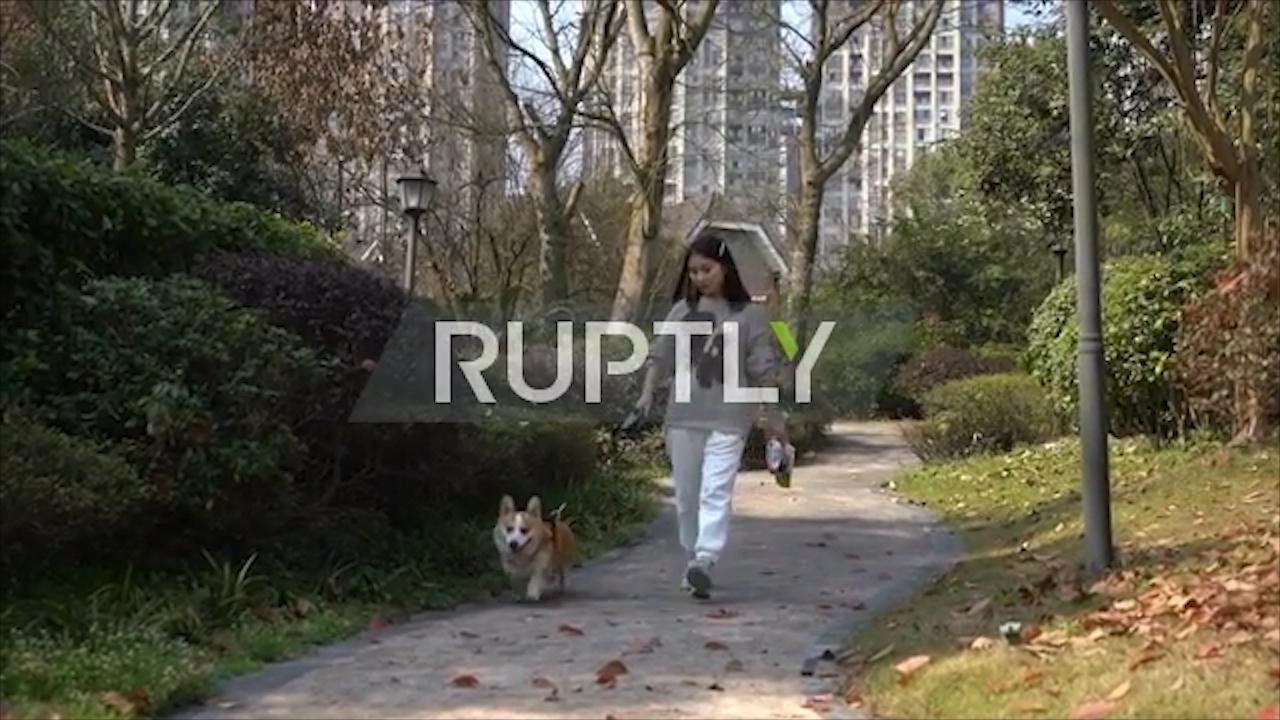 Chú chó nổi tiếng khắp mạng xã hội nhờ khả năng chơi bóng rổ đặc biệt