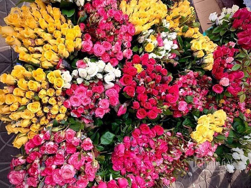 Hoa hồng tăng giá gấp 5, dân buôn tranh mua nhà vườn cháy hàng-1