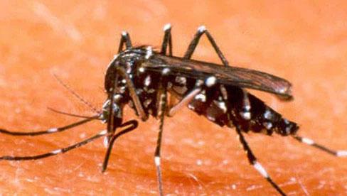 Phú Yên ghi nhận 2 trường hợp tử vong do sốt xuất huyết