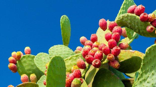 3 loại quả ở Việt Nam mọc dại đầy đường, sang nước ngoài thành của ngon vật lạ bán 1 triệu/kg-3