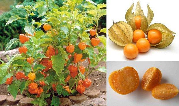 3 loại quả ở Việt Nam mọc dại đầy đường, sang nước ngoài thành của ngon vật lạ bán 1 triệu/kg-6