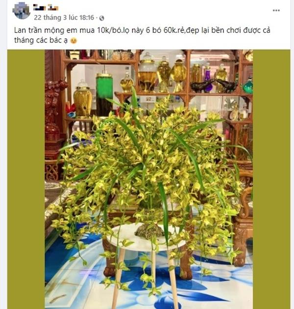 Loài hoa lan vua chúa chỉ mấy chục ngàn đồng mua cả ôm, sự thật là thế nào?-1