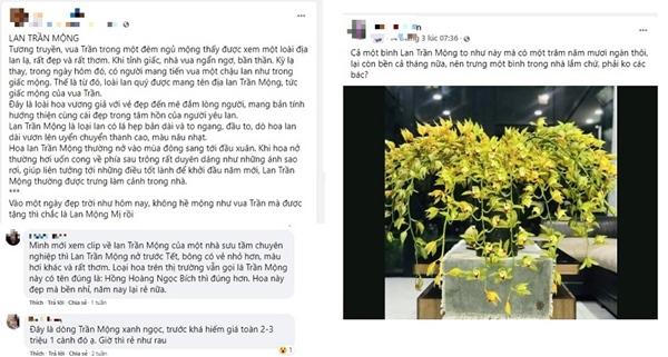Loài hoa lan vua chúa chỉ mấy chục ngàn đồng mua cả ôm, sự thật là thế nào?-3