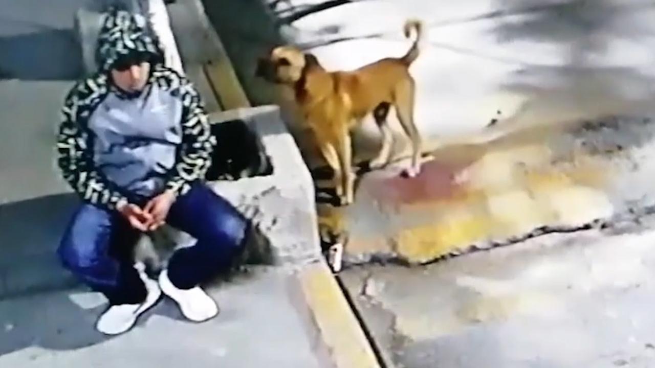 Đang ngồi hóng mát, chàng trai bị chó lạ đuổi té khói