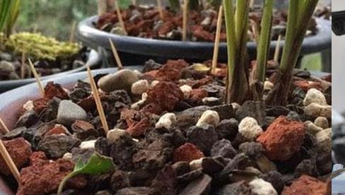 Cắm nhiều cây tăm vào một chậu cây, hóa ra có nhiều lợi ích và kiến thức đến vậy