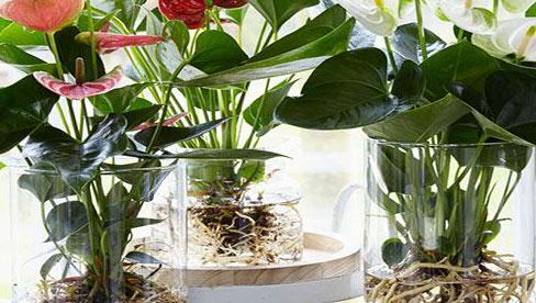 8 loại cây thủy sinh để bàn dễ sống, đặt đặt đâu tài lộc ào ào về đó