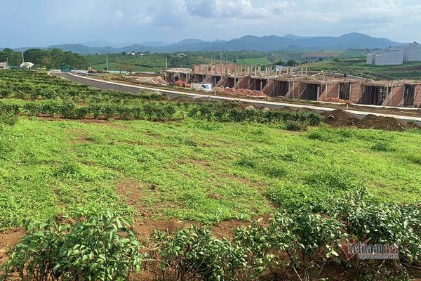 Loạn đất phân lô 'gắn mác' dự án, Lâm Đồng dừng giải quyết hồ sơ tách thửa-1