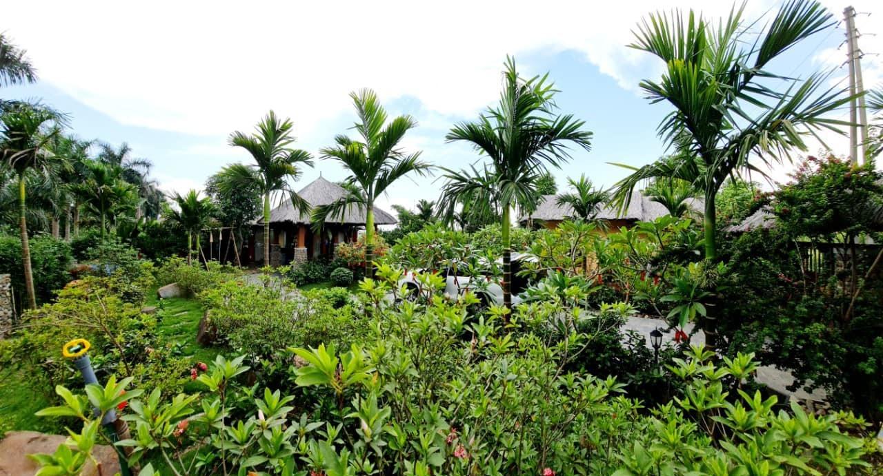 Vợ chồng Hà Nội về ngoại ô xây nhà mái lá, có đủ bể bơi xanh mát-10