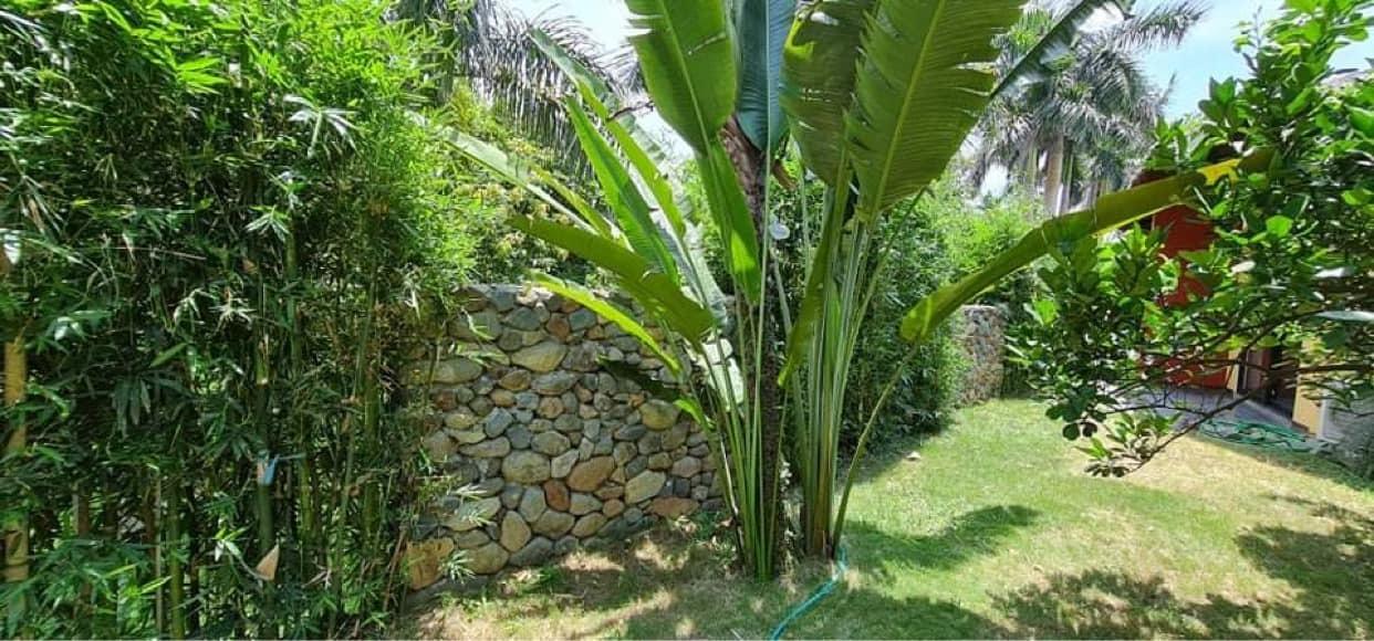 Vợ chồng Hà Nội về ngoại ô xây nhà mái lá, có đủ bể bơi xanh mát-4