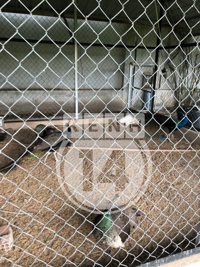 Về thăm Đền thờ Tổ nghiệp của NS Hoài Linh sau loạt lùm xùm từ thiện: Camera bố trí dày đặc, hàng xóm kể không bao giờ thấy mặt-14