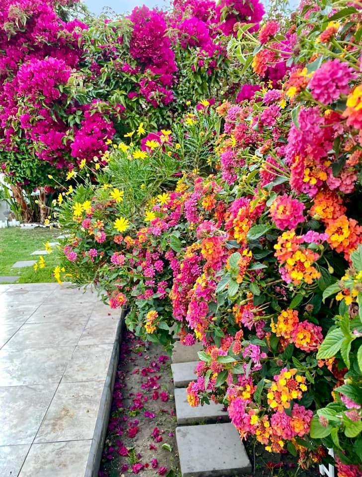 Người phụ nữ Việt gom hàng trăm loài hoa vào nhà vườn 600m2 trên đất Mỹ-13
