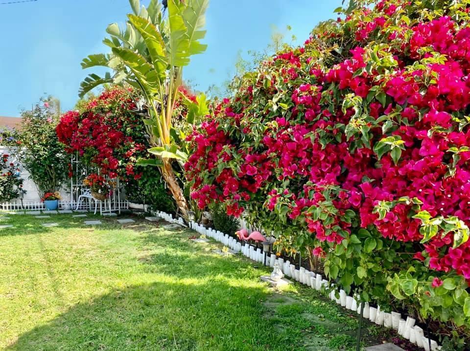 Người phụ nữ Việt gom hàng trăm loài hoa vào nhà vườn 600m2 trên đất Mỹ-2