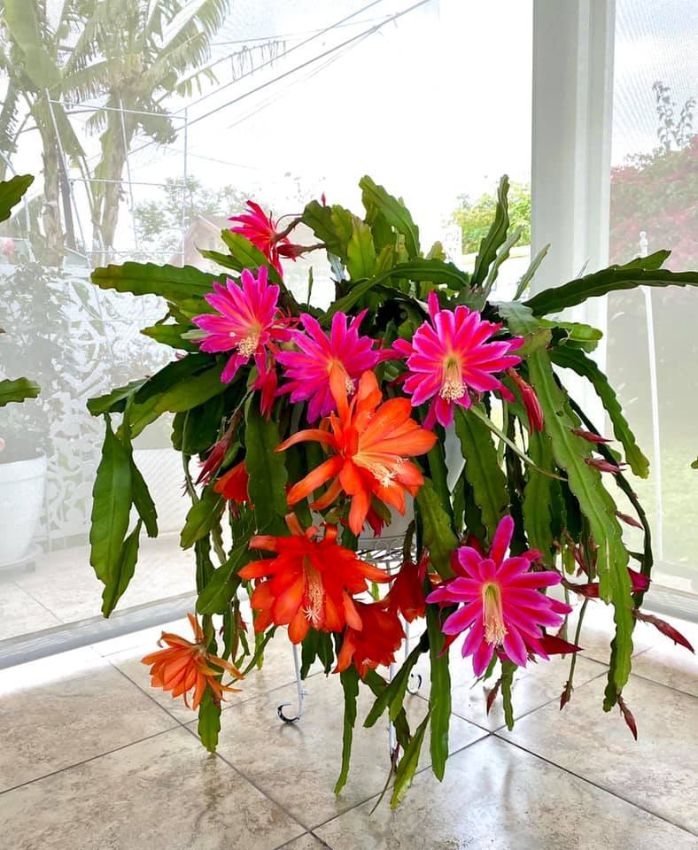 Người phụ nữ Việt gom hàng trăm loài hoa vào nhà vườn 600m2 trên đất Mỹ-17