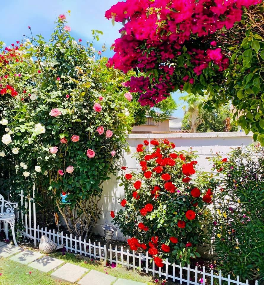 Người phụ nữ Việt gom hàng trăm loài hoa vào nhà vườn 600m2 trên đất Mỹ-8