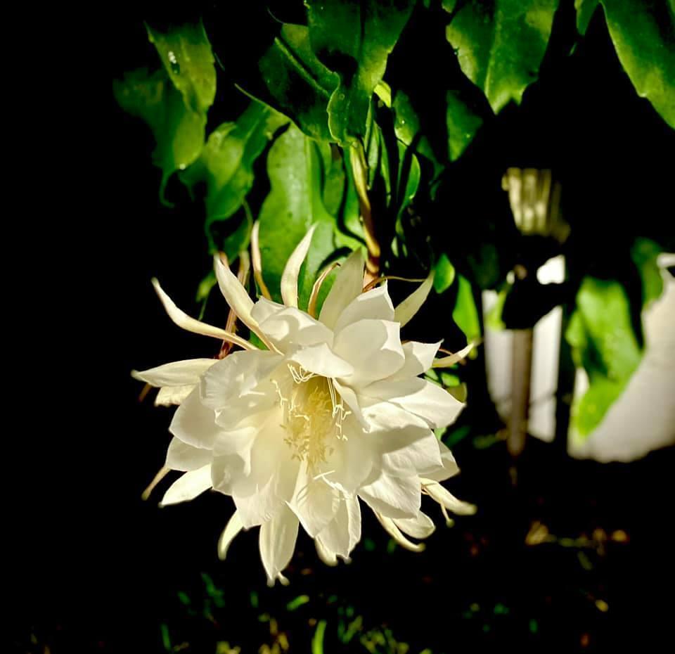 Người phụ nữ Việt gom hàng trăm loài hoa vào nhà vườn 600m2 trên đất Mỹ-21