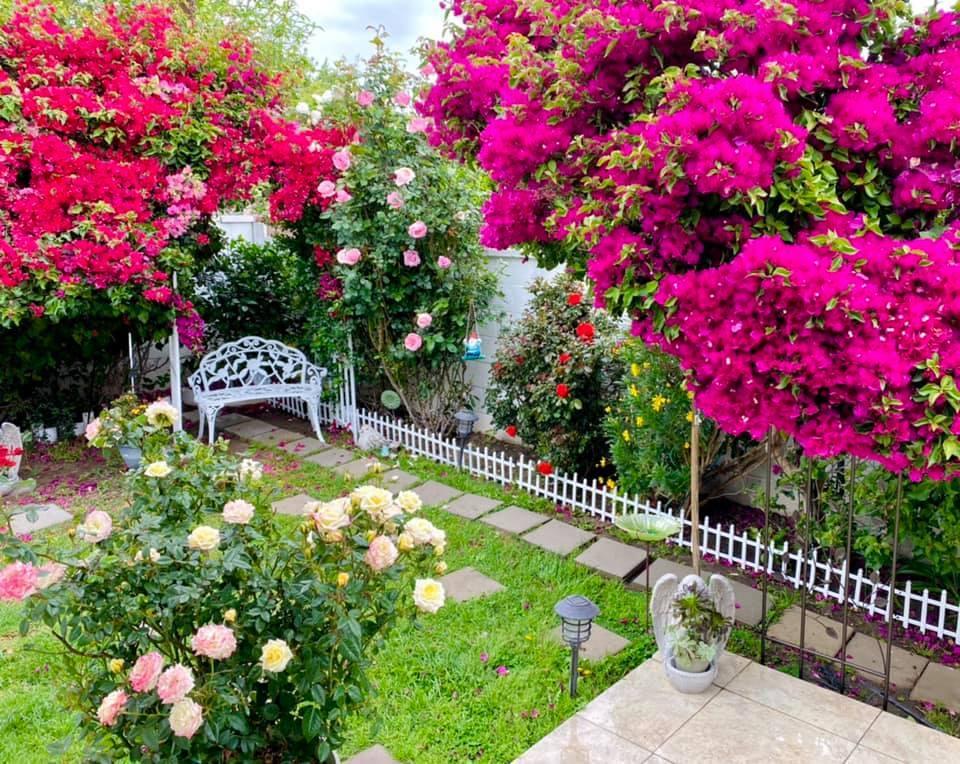 Người phụ nữ Việt gom hàng trăm loài hoa vào nhà vườn 600m2 trên đất Mỹ-1