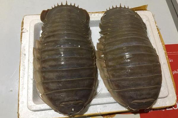 Hình dáng đáng sợ, xấu xí, loài sinh vật biển này lại được săn đón vì ngon hơn cả tôm hùm-1