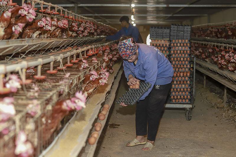 Dân buôn tranh mua, bất ngờ khan hàng, giá trứng tăng cao-2