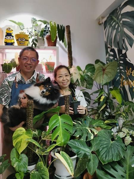 Không thể đi du lịch, người Singapore đổ xô sưu tầm cây cảnh quý hiếm-1