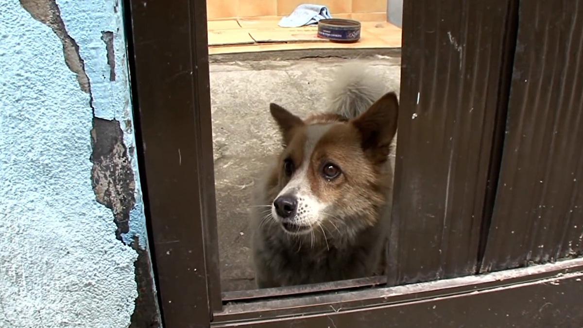 Chú chó đợi chủ quá cố suốt 5 năm trong căn nhà hoang