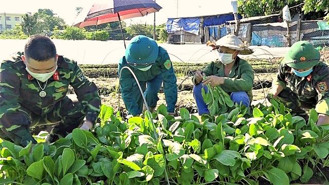 Bộ đội ra đồng, xắn tay giúp nông dân Hà Nội thu hoạch, tiêu thụ rau màu