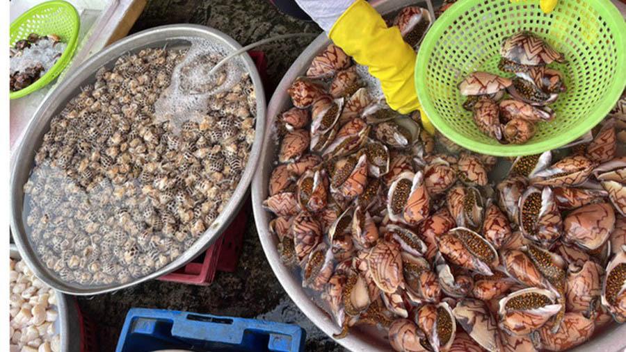 Hải sản rẻ chưa từng có, dân Hà Nội tranh thủ ăn sang