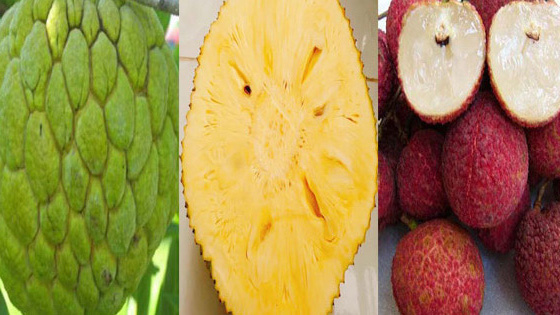Năm loại trái cây không hạt 'làm mưa làm gió' trên thị trường