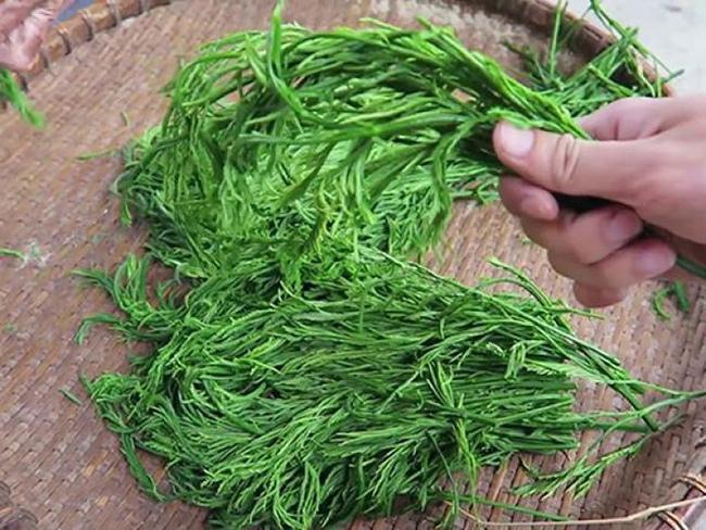 Ngã ngửa 6 loại rau đặc sản mọc hoang giá đắt hơn thịt-4