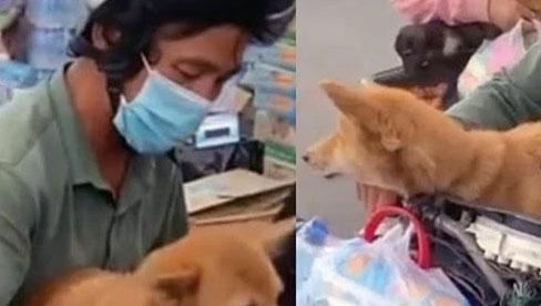 Cà Mau: Chính quyền thừa nhận thiếu sót trong việc tiêu hủy đàn chó được chủ chở về quê