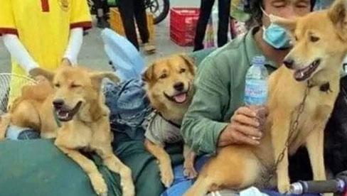 Vụ tiêu hủy 15 chú chó ở Cà Mau: 2 vợ chồng chủ đều không phải người địa phương, đang xác minh xem có khai báo gian dối hay không