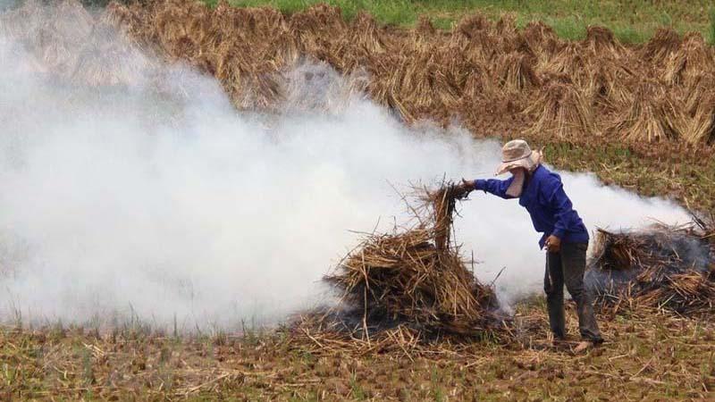 Thứ đốt bỏ khói om trời Hà Nội, Amazon bán 100 USD: Mỗi năm 3 tỷ USD ra tro